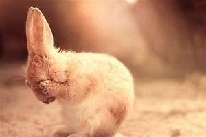 bathing, bunny,... Konijnen Quotes