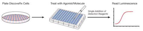 Interleukin cell-based assays