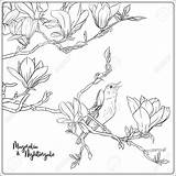 Magnolia Tree Branch Coloring Nightingale Drawing Adult Outline Flowers Illustrazione Flower Illustrations Vectors Vettore Della Trees Branches Ramo Sboccia Bota sketch template