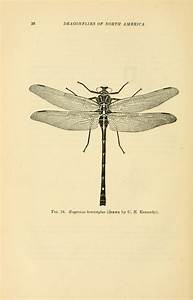 460 Best Ephemera And More Busy Bees  Butterflies  Bugs