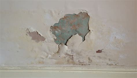treat damp patches  interior walls