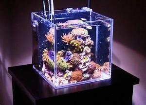 Aquarium Einrichten 60l : was f r meerwasser aquarien gibt es meerwasser ~ Michelbontemps.com Haus und Dekorationen