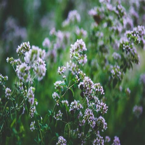 herbs grow   real food mother earth news