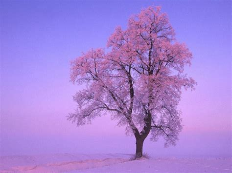 Wallpaper Free Tree Images by Winter Trees Wallpapers Wallpaper Cave
