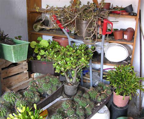 Garten Winterfest Machen Hortensien by Hortensie Pflanzen Jahreszeit Hortensien Zur Ckschneiden