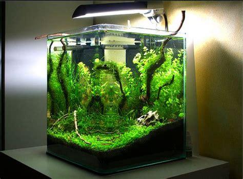 ide kreasi membuat mini aquascape atagalerinet