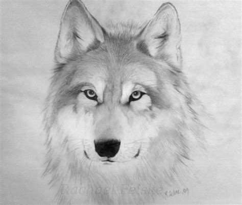 Wolf Drawing Wallpaper by Free Wolf Drawings Free Clip Free Clip