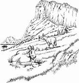 Mountain Coloring Goat Animals Printable Adults sketch template