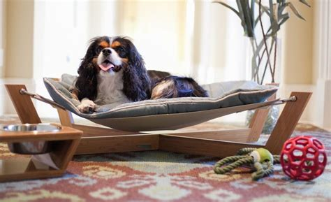 pet hammock bed 21 creative beds ideas to get inspired