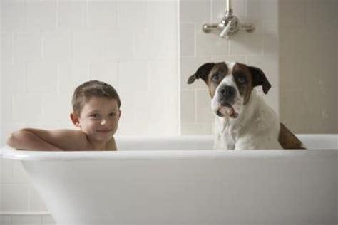 differences  dog shampoos human shampoos pets