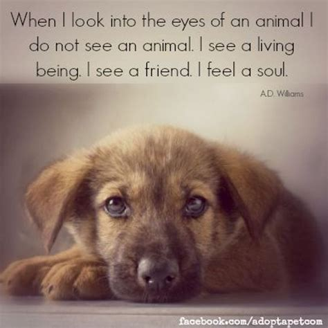 animal rescue quotes  sayings quotesgram