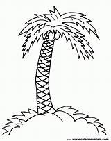 Coloring Palm Tree Pages Sheet Adults Popular sketch template
