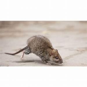 Comment Se Débarrasser Des Souris Dans Une Maison : comment les souris entrent dans les maisons comment les souris entrent dans les maisons les ~ Nature-et-papiers.com Idées de Décoration