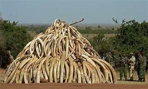 Elephant poaching crisis unchanged a year after global ...
