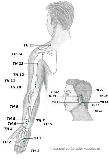 acupuncture b b si ge acupressure points chart acupuncture acupressure and