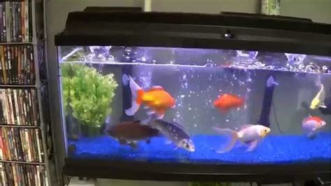 koi goldfish pond  custom winter tank setup youtube