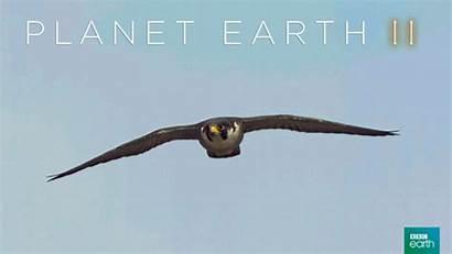 Soar Earth Planet Bbc Giphy Bird Gifs