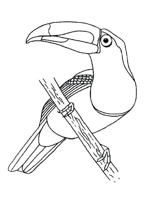 toucan bird coloring pages  getcoloringscom