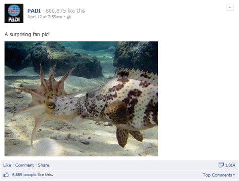 squid scuba divers facts sanne otterstad credit