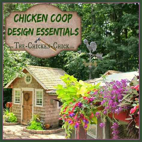 chicken coop design essentials details luxuries happy
