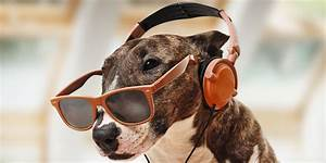 Dogs love Bob Marley new research finds - Third Force News