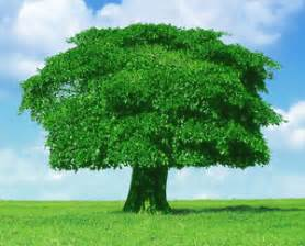trees planting protection