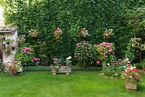 Companion Plants for Your Hydrangeas | Espoma