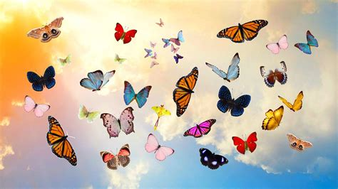 butterfly aesthetic desktop wallpapers