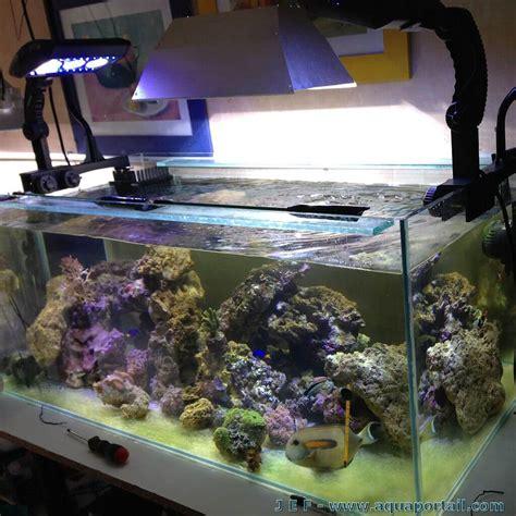 nouvel aquarium r 233 cifal 360 litres 233 clairage led partiel g 233 n 233 ralit 233 s de maintenance marine
