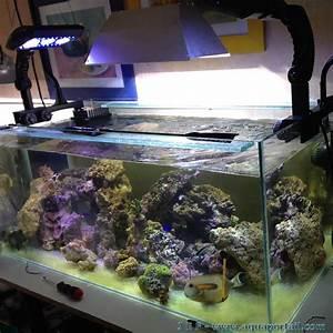 360 Liter Aquarium : nouvel aquarium r cifal 360 litres clairage led partiel ~ Sanjose-hotels-ca.com Haus und Dekorationen
