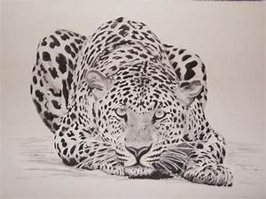 Image detail for -Charcoal Drawings of African Animals ...