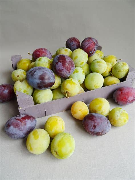 pate de fruit prune 28 images recettes de pate de fruit 1000 id 233 es sur le th 232 me