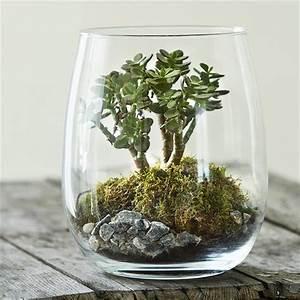 Terrarium Plante Deco : terrarium bonsa crassula nature d couvertes ~ Dode.kayakingforconservation.com Idées de Décoration