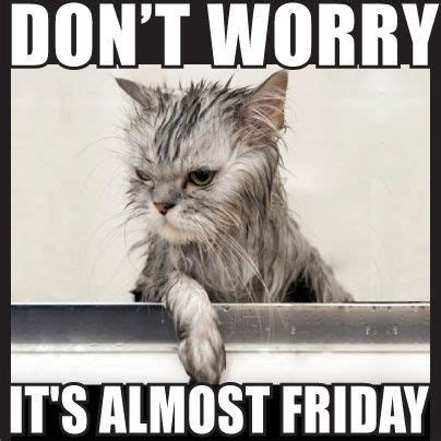 Almost Friday Meme - 20 funny almost friday meme sayingimages com