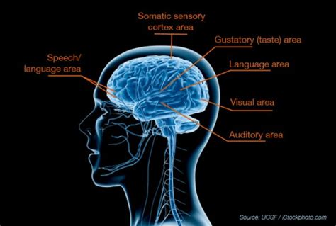 sensory integration neuropsychological testing
