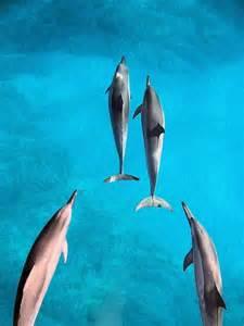 Kauai Hawaii Dolphins