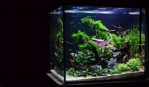 Aquarium Einrichten Anfänger : interview mit alexander paulus ~ Lizthompson.info Haus und Dekorationen