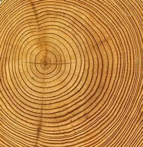 Tree Rings  U2013 Journey For Orphaned Youth