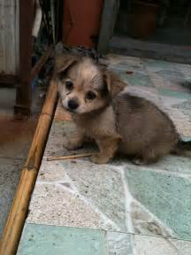 Cutest Baby Puppy in the World