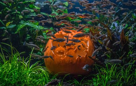 zoo chester animals pumpkin spooky fish interact treats different