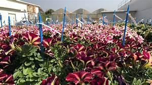 Koi De 9 En Israel : as fue como israel hizo 39 florecer 39 el desierto unidos x israel ~ Medecine-chirurgie-esthetiques.com Avis de Voitures