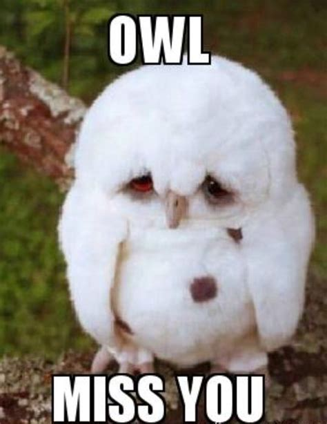 Miss Meme - meme owl miss you meme owl cute what makes me giggle pinterest you meme owl miss