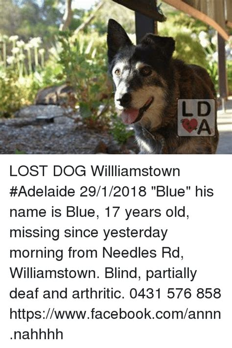 Lost Dog Meme - ld lost dog willliamstown adelaide 2912018 blue his name is blue 17 years old missing since