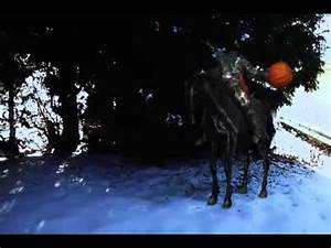 Headless Horseman sightings - YouTube