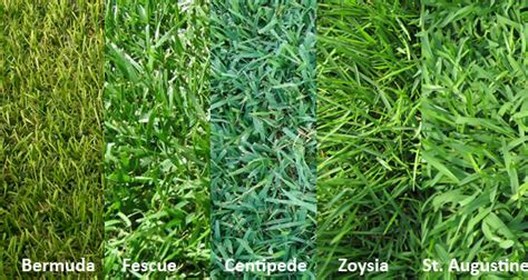 Choosing The Right Grass For Your Lawn  Mow 'n Blow