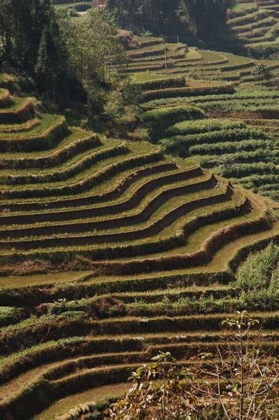 terraced landscape photo