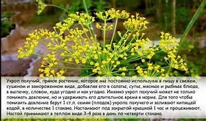 Гипертония лечение семенами подсолнечника