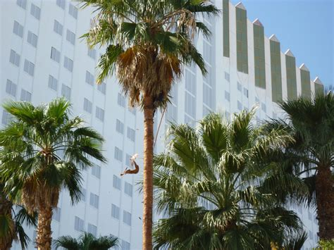 Palm Tree Trimming « Affordable Tree Service, Las Vegas, Nv. Free Efax Number Google Online College Degree. Does A Dui Show Up On A Background Check. How To Receive Fax Via Email. Loft Factory Store Coupon Website Menu Design. Lasik Eye Surgery New Orleans. Remote Desktop Concurrent Sessions. Colleges In Atlanta Ga For Nursing. New Brunswick Rutgers University