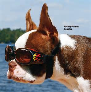 Extra Large Doggles ILS Dog Goggles for Eye Protection