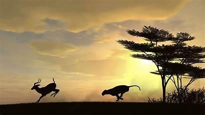 African Animals Africa Desktop Wallpapers Animal Pixelstalk